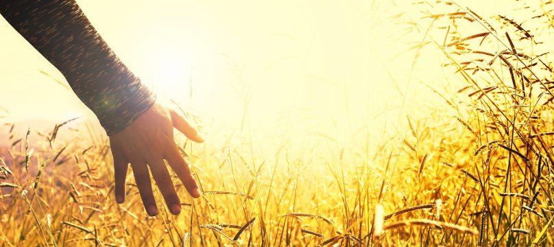 Main dans les champs