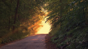Un chemin vers la lumière, dans une forêt